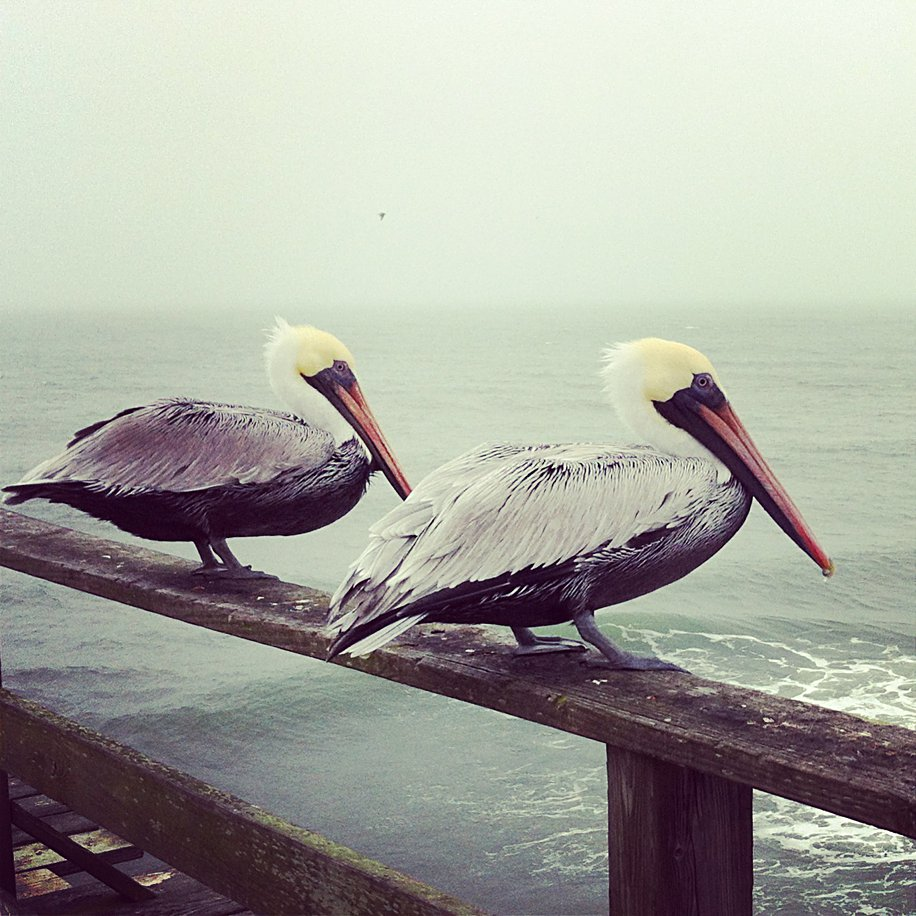 Things to do | Adventure along the Coast | Simply Living NC