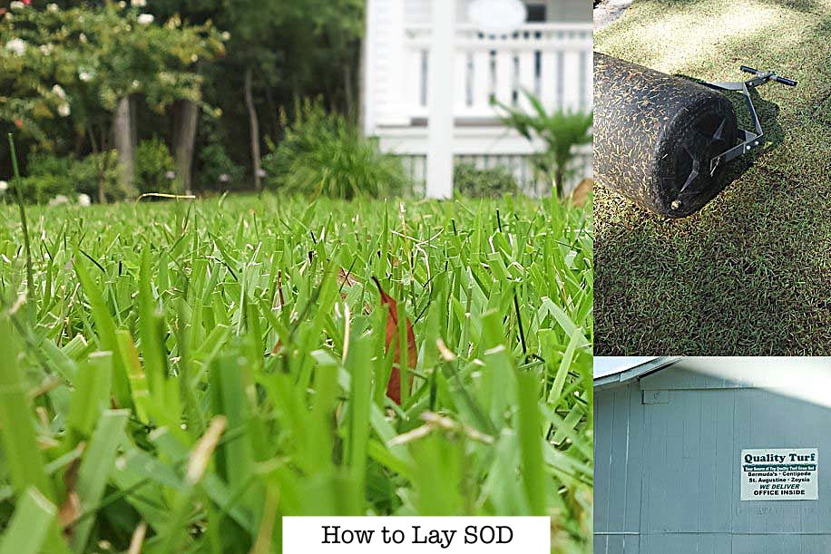 How to Lay Sod to Save Money | DIY 5 step guide