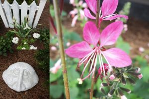 Privacy Plants in a Cottage Garden an Alternative Privacy Fence | Simply Living NC