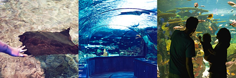 Things to do in Myrtle Beach SC Vacation Fun | Simply Living NC