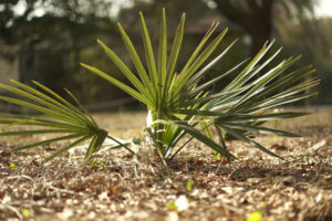 Salt Damaged Plants; how to help plants recover | Simply Living NC