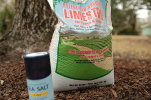 Salt Damaged Plants; how to help plants recover