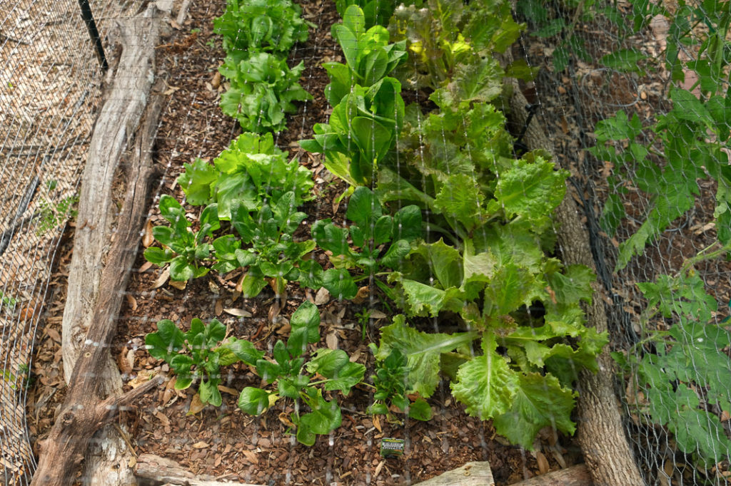 Vegetable Garden Planning Made Easy in a Small Space with Bonus Garden Pest Spray | Simply Living NC