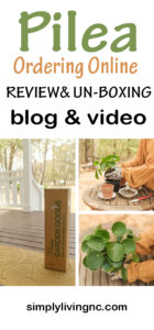 PILEA PEPEROMIOIDES ONLINE ORDERING UNBOXING, REPOTTING & PROPAGATION | SIMPLY LIVING NC
