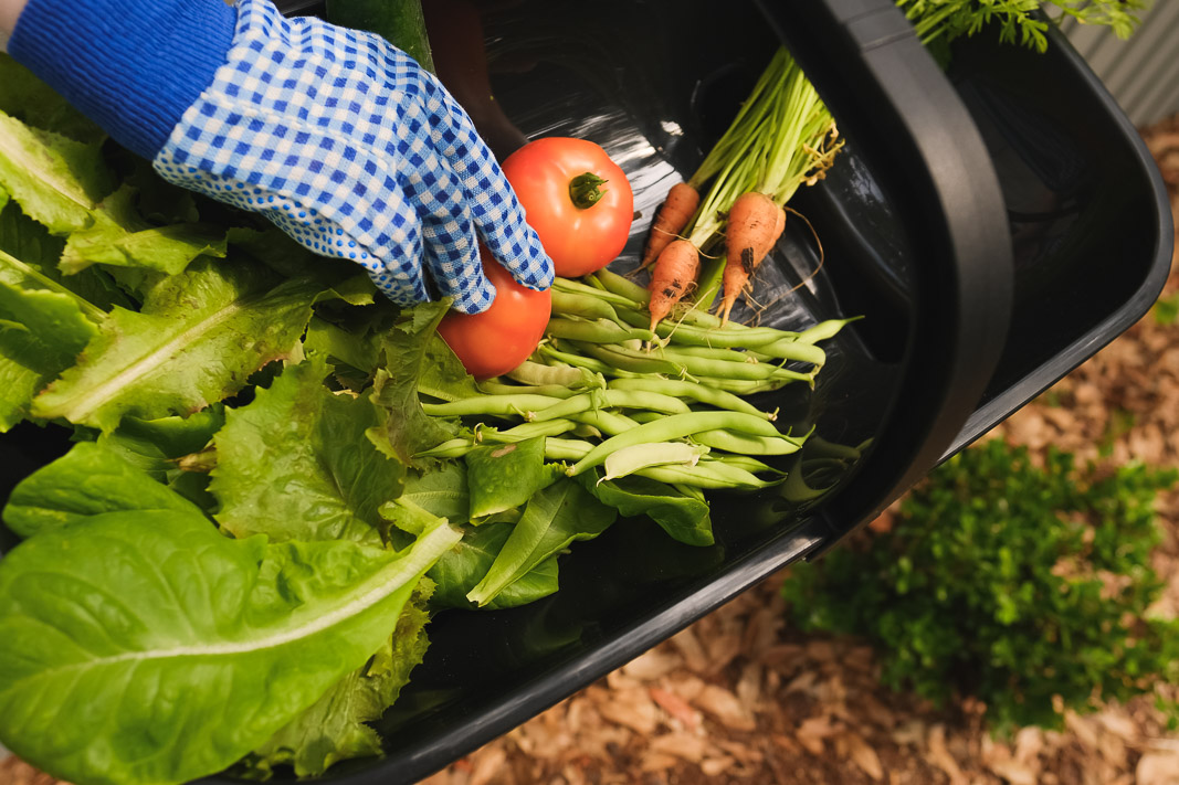 DIY Small Vegetable Garden Summer Harvest | Simply Living NC