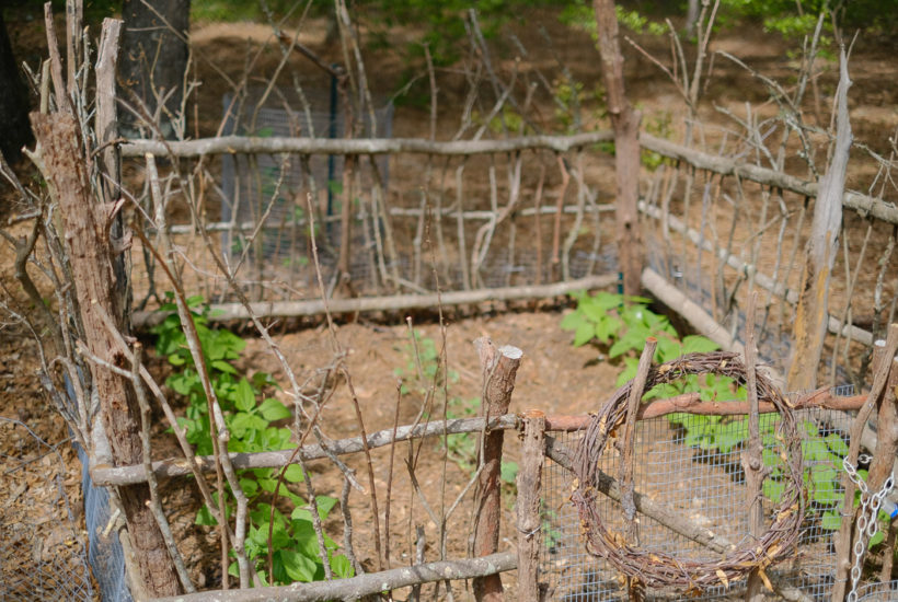 VICTORY GARDENS WITH FORAGED ITEMS WHILE QUARANTINED | SIMPLY LIVING NC