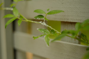 Whiteflies on Your Garden Plants & Houseplants; how get rid of pests with my 5 Step Solution | Simply Living NC