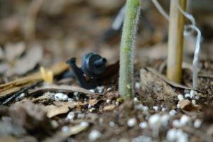 DIY Vegetable Garden Drip Irrigation; made easy | Simply Living NC