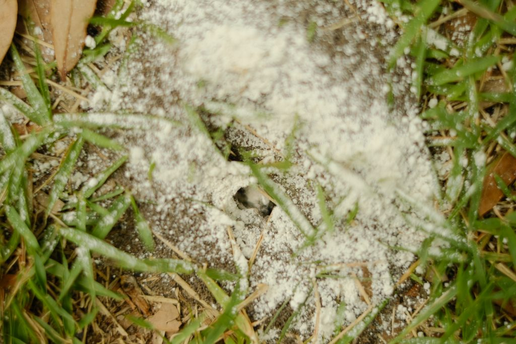 Get Rid of Fire Ants and Treat Bites & Stings with 4 simple products SIMPLY LIVING NC